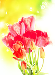 Beautiful garden fresh red tulips on abstract spring background