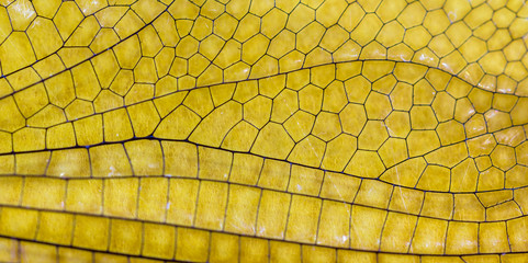 Textura de asa de libélula.