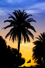 Tropical image of a palm at sunset