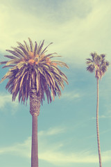 Palm trees at Santa Monica beach.california-vintage style