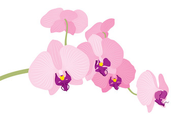 Vector illustration of orchid flower branch on white background.
