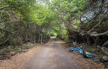 Path leading through a forest on Isabela