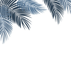 Palm Leaf on White Background with Place for Your Text Vector Il