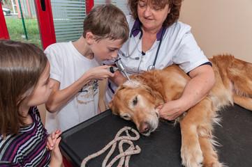 Le vétérinaire donne des conseils aux enfants pour le bon entretien et la bonne santé du chien par des explication anatomique.
