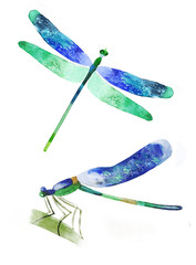 watercolor dragonfly on a white background