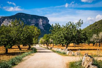 Wanderweg von Bäumen gesäumt - Blick auf den Hausberg von Alar