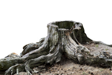 Old weathered tree stump