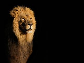 Portret van een grote mannelijke Afrikaanse leeuw (Panthera leo) tegen een zwarte achtergrond, Zuid-Afrika.