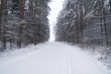 Заснеженная лесная дорога зимой