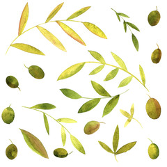 watercolor branches of olives with leaves