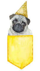 pug dog in the pocket Watercolor painting. Can be used for postcards, prints and design