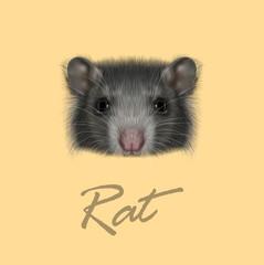 Domestic Rat portrait