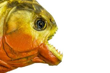 piranha fish on white background