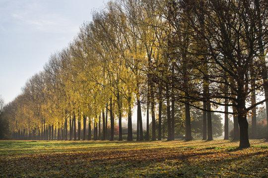 rij bomen in park tijdens herfst