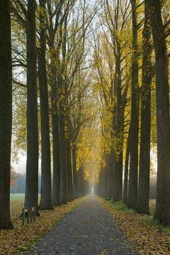 weg in park met aan beide zijden bomen in herfstkleuren
