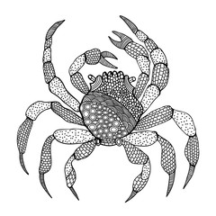 Crab isolated in zentangle style