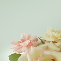 sweet color roses in soft color style for romantic background