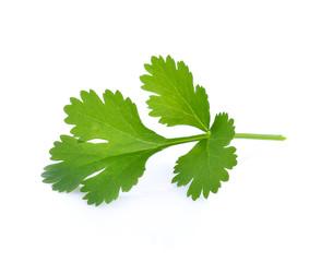 parsley isolated on white background.