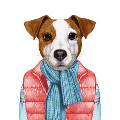 Animals as a human. Portrait of Jack Russell in down vest and sweater. Hand-drawn illustration, digitally colored.