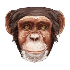 Portrait of Monkey. Hand-drawn illustration, digitally colored.