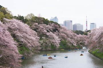 千鳥ヶ淵の桜と東京タワー
