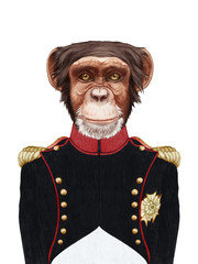 Portrait of Monkey in military uniform. Hand-drawn illustration, digitally colored.