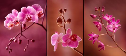 Orchidea tryptyk w fioletach Wall mural