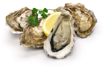 Acrylic Prints Seafoods fresh oysters isolated on white background