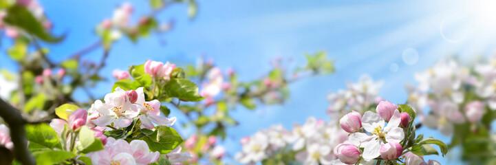 Frühling 355