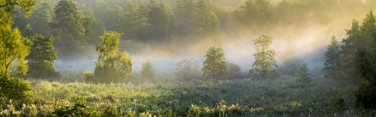 Obraz Słońce przebijające się przez mgłę na leśną polanę - fototapety do salonu