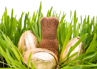 Chocolate bunny in the grass with easter eggs