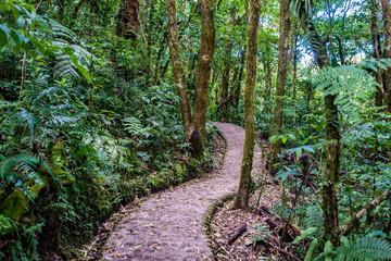 Walking Trail in Cloudforest - Costa Rica
