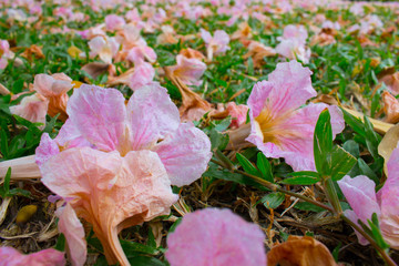 pink fallen flowers on green grass