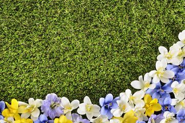 Spring flower border background, grass copy space