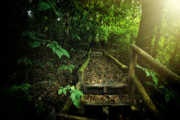 Rainforest at angka nature trail in doi inthanon national park C