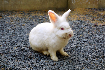 White Rabbit in garden