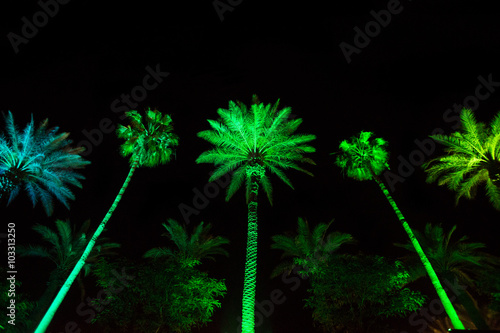 palm trees at night in miami colorful and vibran green led lights