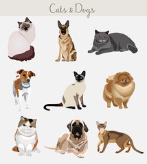 Dogs and cats set. Different types isolated.