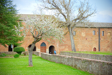 Medieval kept garden with trees in bloom near a ruined abbey
