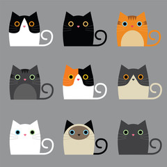 various cute cats