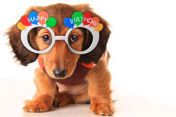 Happy Birthday puppy