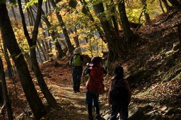 秋 西沢渓谷 ハイキング 家族 落ち葉