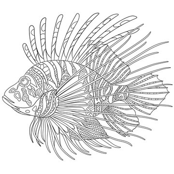 Zentangle stylized cartoon zebrafish (lionfish,pterois volitans), isolated on white background. Sketch for adult antistress coloring page. Hand drawn doodle, zentangle elements for coloring book.