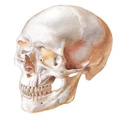 Illustration with skull.