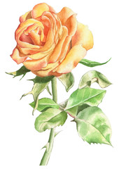 Illustration with realistic rose.