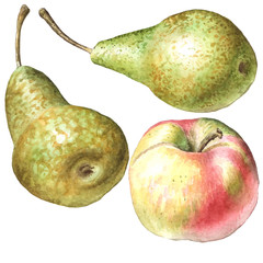 illustration with pears and apple.