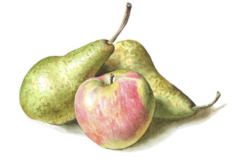 illustration with pears and apples.