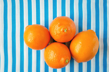 Sweet citrus fruits tangelos on a striped background