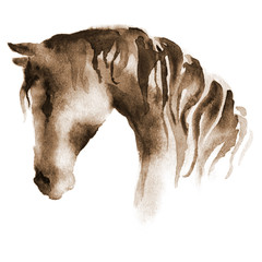 Wet watercolor horse head. Hand painted brown horse on white.
