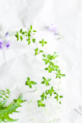 Fresh Thyme on paper background for culinary themes